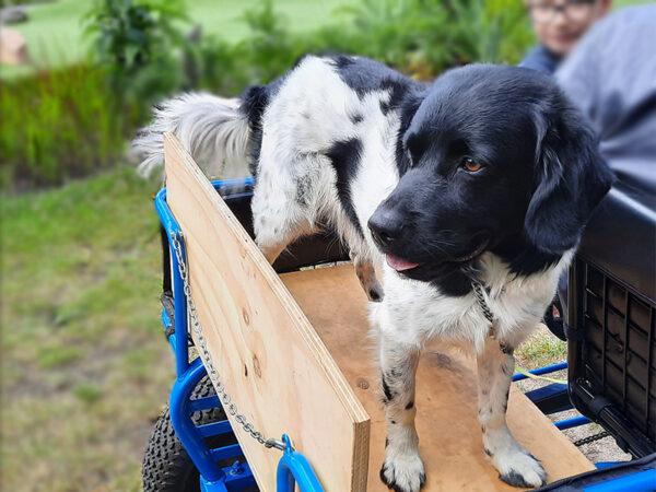 Hond op Piet Plezier